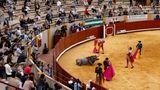 Moron dela Frontera, Spanien. Der Stier hat den blutigen und ungleichen Kampf verloren und liegt tot im Sand. Der Matador grüßt das Publikum. Trotz Pandemie durften 20 Prozent der Plätze in der Arena belegt sein.