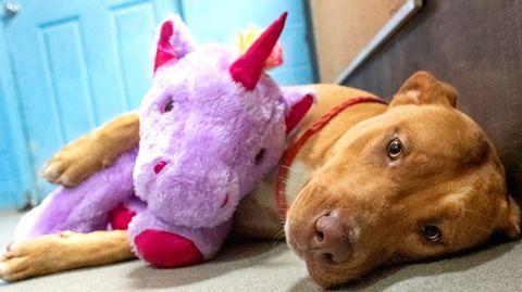 Streunender Hund versucht fünf Mal ein Spielzeug aus einem Geschäft zu stehlen – bis Tierschützer es ihm schenken