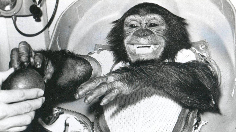 Schimpanse Ham