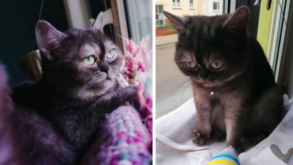 """Katze Bean wurde lange nicht vermittelt, weil sie """"hässlich"""" ist"""