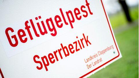 Ein weißes Schild mit roter Schrift weist auf einen Sperrbezirk wegen der Geflügelpest hin