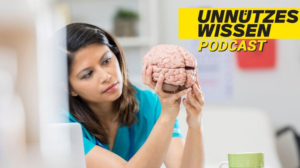 Unnützes Wissen:Graue Zellen und Brain-Freeze – was steckthinter diesen Redewendungen?