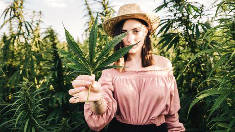 Trend Cannabis-Aktien