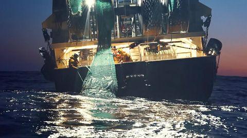 Die Fischindustrie saugt die Meere systematisch leer.