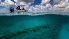 Die Fischer begutachten die Heringsmakrelen im Netz