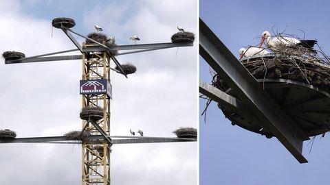Zwei Stahlträger laufen spitz zusammen. Auf deren Spitze ist eine runde Plattform mit einem Storchennest und zwei Vögeln