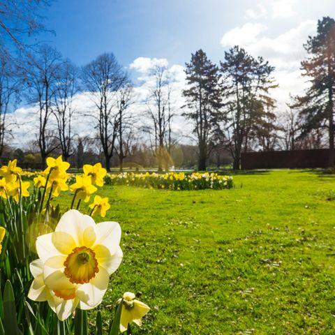 Wetter in Deutschland: Wan kommt endlich der warmen Frühling? So durchwachsen ist die Prognose bis Mai