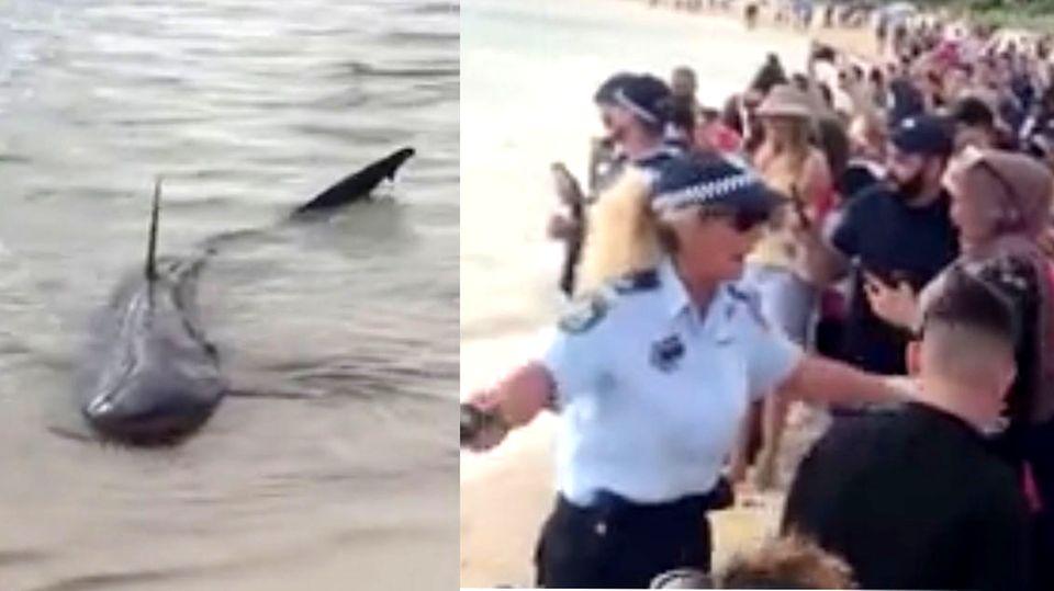 Hai sorgt für Aufruhr an australischem Badestrand