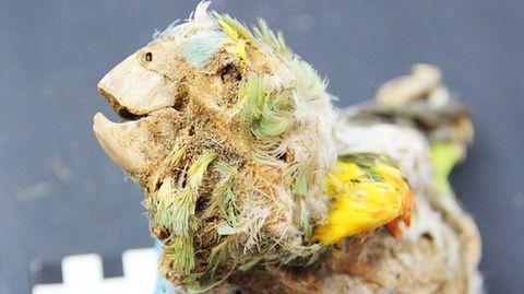 Südamerika: Mumifizierte Papageien offenbaren düstere Seite unserer Geschichte