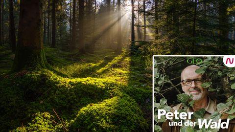 Peter Wohlleben geht in seinem Podcast den Geheimnissen des Waldes auf die Spur.