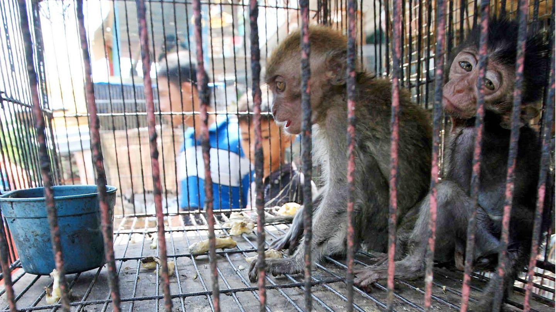 Zwei Affen sitzen in einem Käfig auf einem Markt in Medan, Indonesien (Archivfoto)
