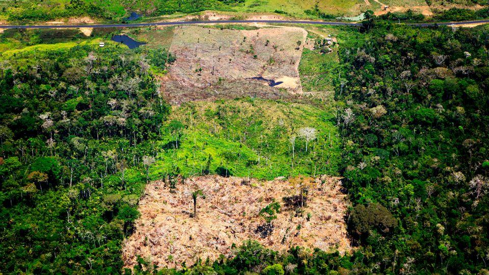 Brasilien, Acre: Luftaufnahme eines abgeholzten Gebiets im Amazonas-Regenwald