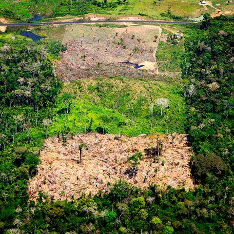 """WWF-Bericht: EU nimmt einen Spitzenplatz in der """"Weltrangliste der Waldzerstörer"""" ein"""