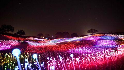 """Die Kunstinstallaion """"Field of Light"""" des Künstlers Bruce Munro"""