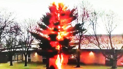 Screenshot aus einem Video: Blitz schlägt in einen Baum ein