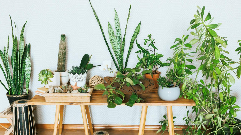 Warum sollte man sich nachhaltige Zimmerpflanzen kaufen?