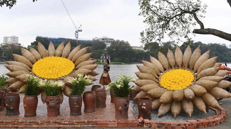 Hanoi, Vietnam. Und noch mehr Blumen.Diese dürften allerdings nicht ganz so schön duften, wie die Rosen aus Taif. Die riesigen Sonnenblumen, die die Uferpromenade des Hoan-Kiem-Sees zieren, sind aus Bambus gemacht.