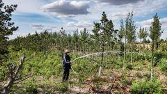 Inzwischen werden lokale Bauern als Waldpfleger bezahlt. Sie müssen dafür sorgen, dass die Setzlinge überleben.