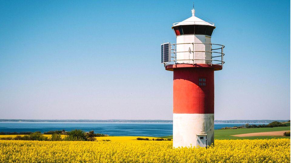 Blühendes Rapsfeld auf der schwedischen Insel Ven