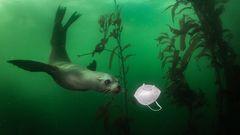 Seelöwe entdeckt Schutzmaske