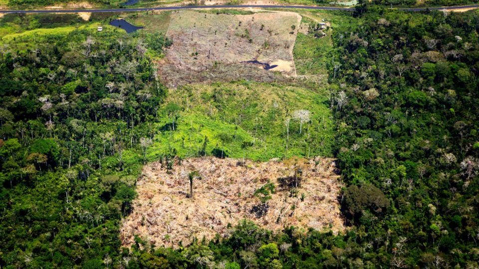 Gerodete Flächen des Amazonas in Brasilien.