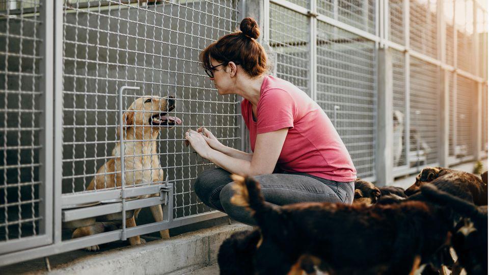 Eine Frau sitzt vor einem Käfig eines Hundes im Tierheim