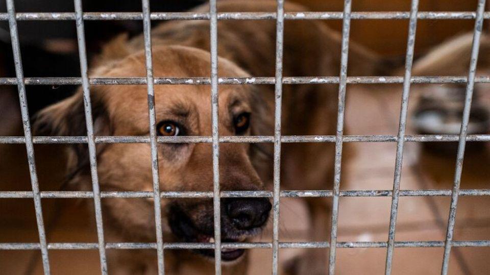 Ein Hund in einem Berliner Tierheim.