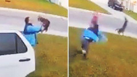Rotluchs: Tollwütige Raubkatze fällt Frau an – ihr Ehemann reagiert sofort