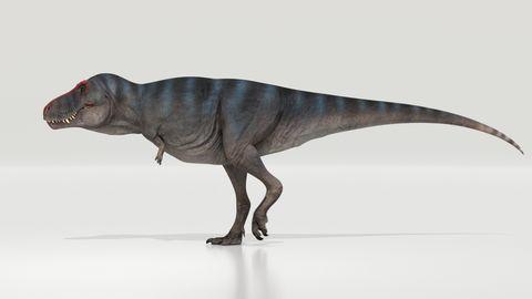 Das Bild zeigt eine Rekonstruktion des Tyrannosaurus rex