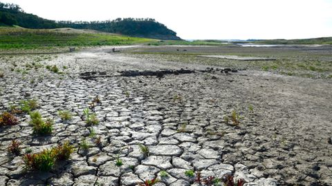 Klimaforschung: Das große Sterben