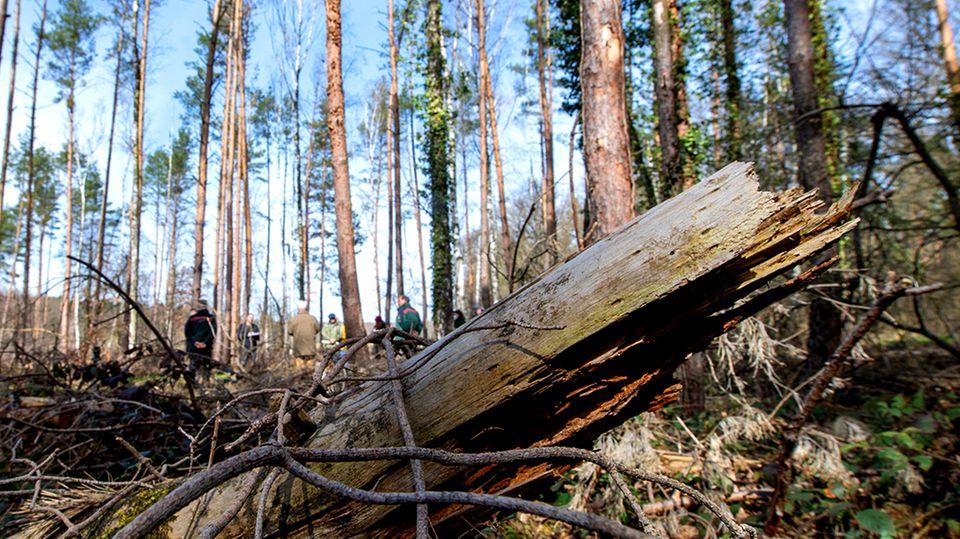 Earth Day 2021: Kaputter Wald in Deutschland (Symbolbild)
