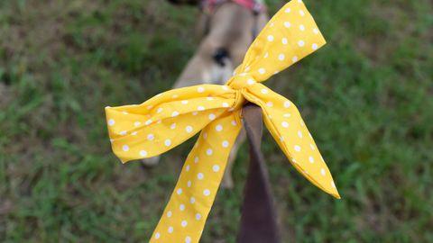 Die gelbe Schleife bei Hunden hat eine besondere Bedeutung und signalisiert, dass entsprechender Hund besondere Bedürfnisse hat.