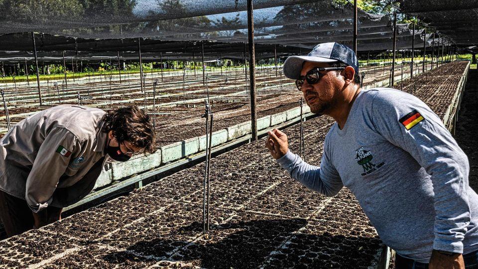 Felix Finkbeiner und ein Mitarbeiter im offiziellen Stiftungsshirt prüfen Jungpflanzen
