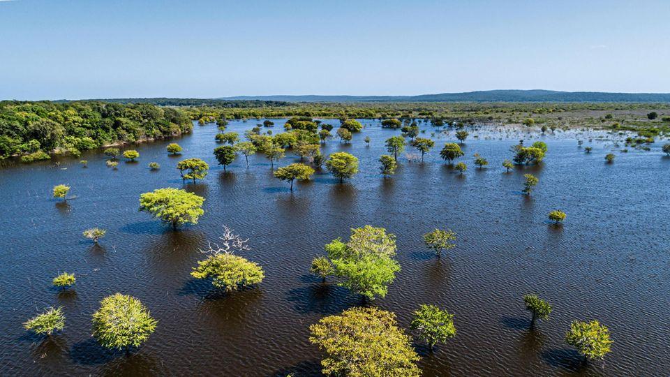 Pflanzgebiet auf der Halbinsel Yucatán