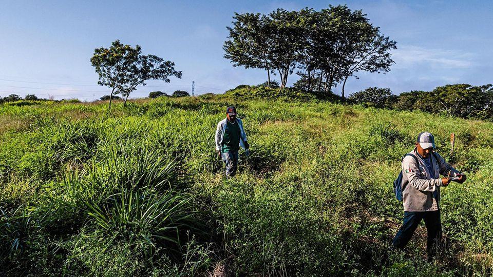 Arbeiter von Plant for the Planet auf ihrem Versuchsfeld in Mexiko