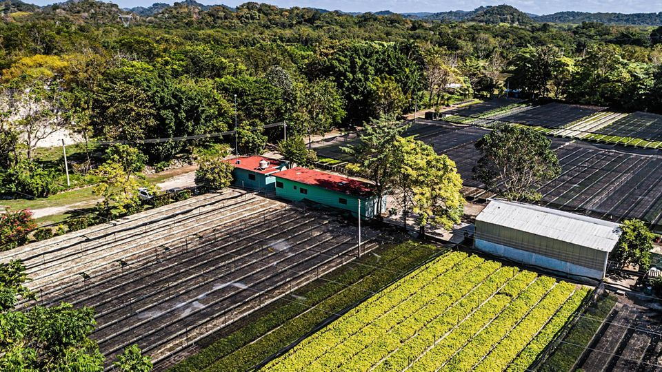 Baumschule von Plant for the Planet nahe dem mexikanischen Constitución