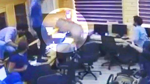 Saumäßiges Chaos: Schwein sorgt in Büro für Aufregung