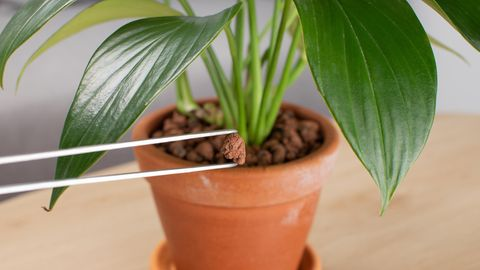 Tongranulat ist eine Alternative zur Pflanzenerde
