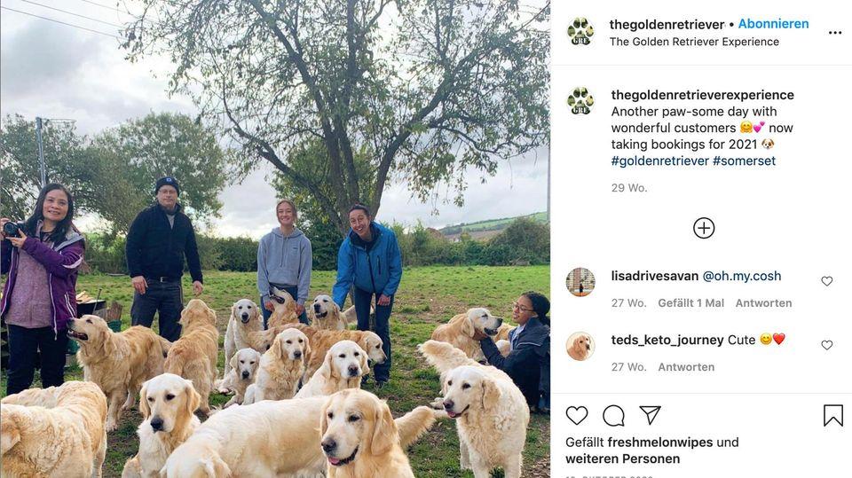 Auf ihrer Instagramseite teilt The Golden Retriever Experience von glücklichen Besuchern umgeben von zahlreichen Hunden