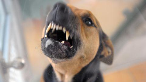 Ein Hund fletscht die Zähne