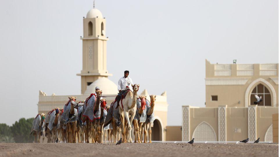 Ein Kameltreiber in Dubai