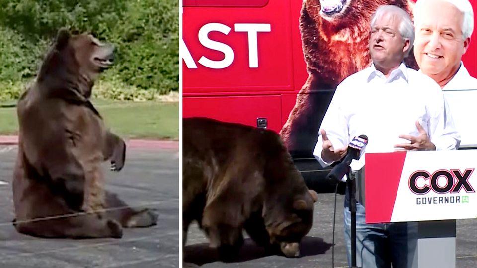 John Cox: Kalifornischer Politiker erscheint mit 450-Kilo-Bären bei Wahlkampfauftritt.