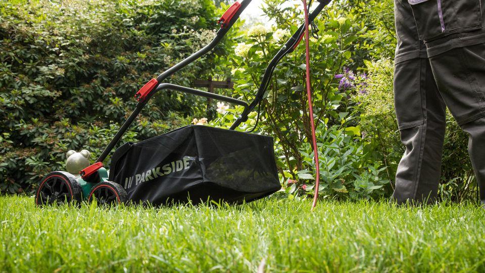 Rasen vertikutieren: Elektro-Vertikutierer wird über den Rasen geschoben
