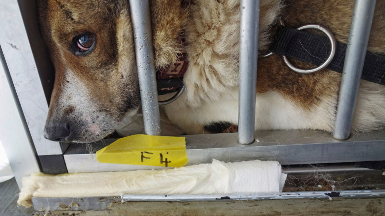 Hund liegt in einer Transportbox.