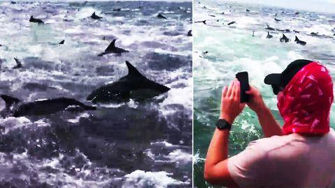 Angler filmen zahlreiche Delfine bei der Jagd