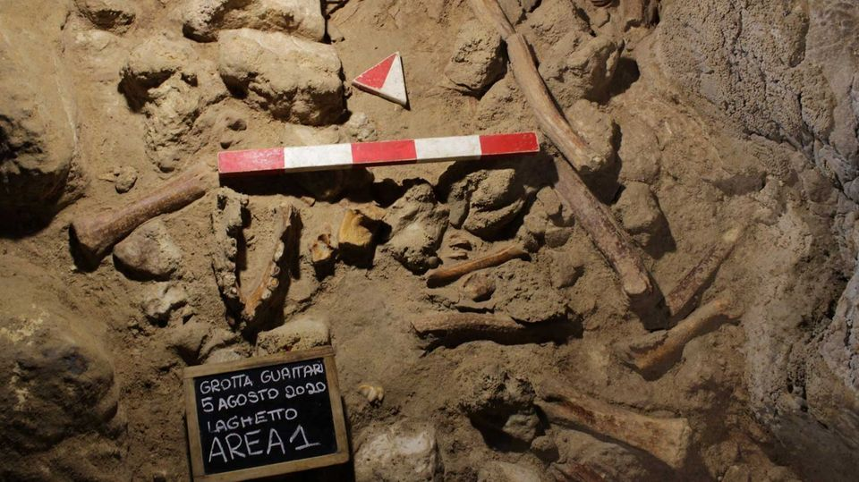Reste von Knochen sind auf einem sandigen Untergrund zu sehen