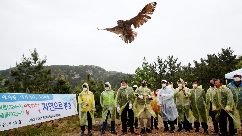 Taean, Südkorea: Mitglieder der koreanischen Vogelschutzvereinigung entlassen einen Uhu, dessen Population im Bestand gefährdet ist,in die Freiheit. Der Vogel, der als Naturdenkmal Nr. 324-2 des Landes ausgewiesen ist, wurde im Januar von einem Anwohner gerettet.
