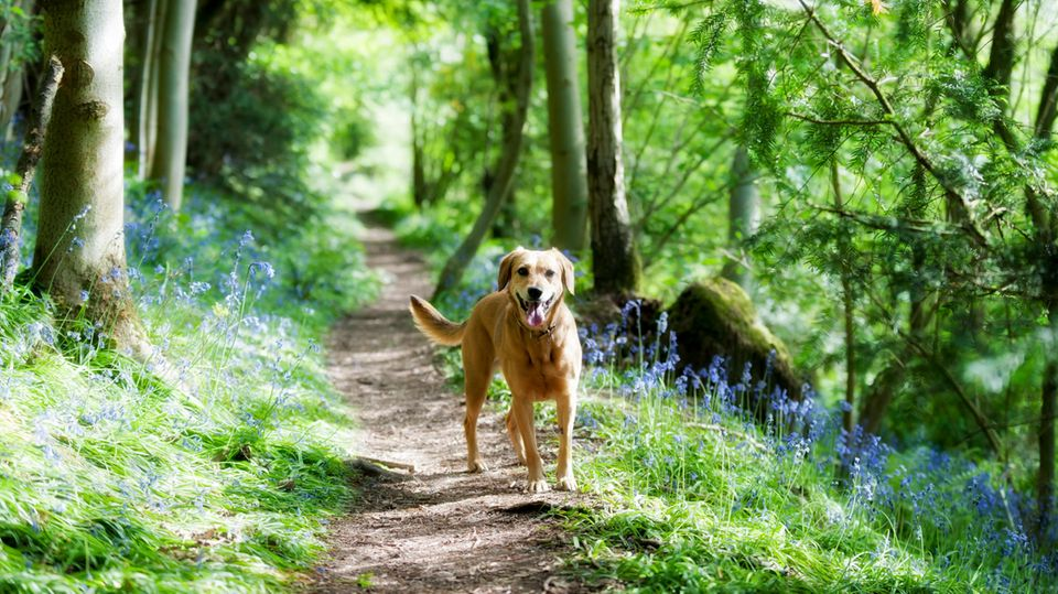 Mithilfe einer Hundepfeife erreichenSie Ihren Hund beim Freilauf auch über große Distanzen hinweg