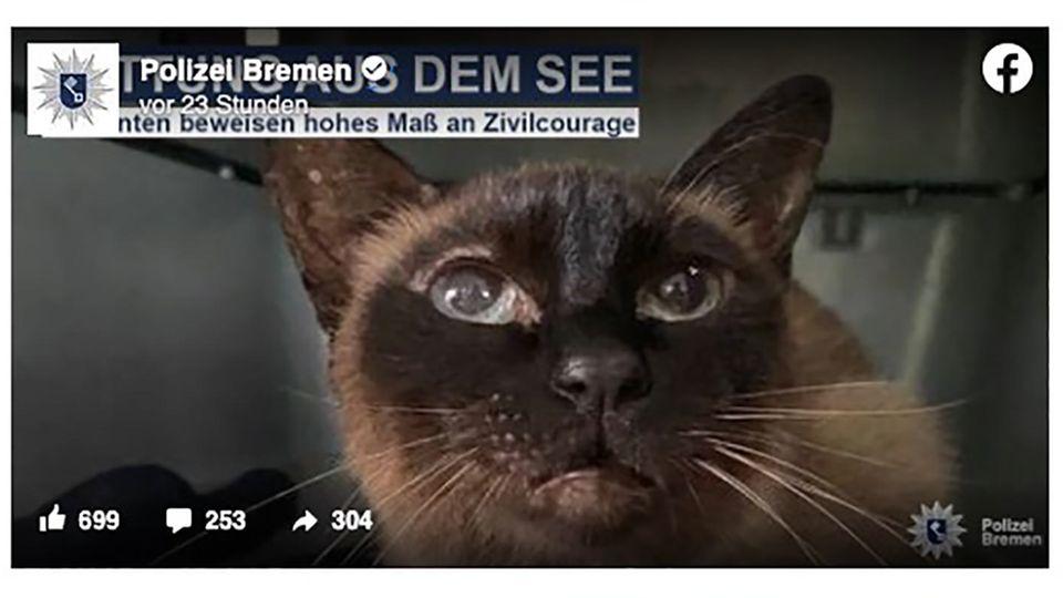 Eine Katze blickt mit großen Augen in Richtung des Betrachters