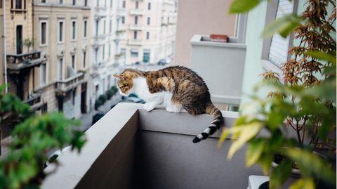 Ein Balkon ist in der Regel nicht katzensicher